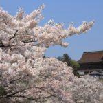 桜の名所吉野山をハイキングで巡る  世界遺産 奈良・吉野のおすすめ観光スポット37選