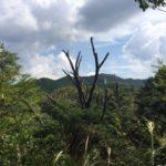 風切山(かぜきりさん)標高356.4m・腕扱山(128m) ・愛知県新城市