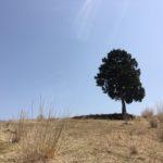 天狗棚(1240m) 1200高地(天狗ノ奥山 1229.3m) 井山(1195m) 碁盤石山(1189.4m)