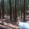 池の平(遠州七不思議 幻の池)・静岡県天竜区水窪町