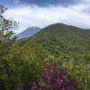 越前岳(1504m) 黒岳(1086.5m) 呼子岳(1310m)・愛鷹連峰