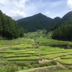四谷の千枚田 (よつやのせんまいだ)・愛知県新城市四谷