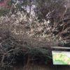 高天神山(131m) 楞厳地山(220m) 高天神城跡・静岡県掛川市