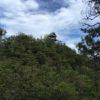 猿啄城(さるばみじょう)・岐阜県加茂郡坂祝町勝山